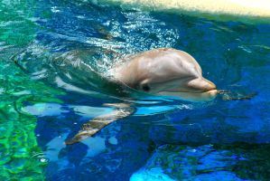 Hello Dolphin by Celem