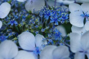 Blue Flowers by Savetheearthwithart