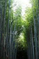 Bamboo Forest by setsuna22