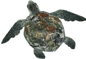 Turtle numbers by Temerain