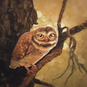 Owl sketch on acrylics by vincenthachen
