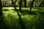 Grass Roots by scotto