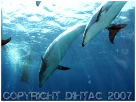 Dolphins by DihtagZ