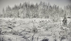 cold forest by Vurtov