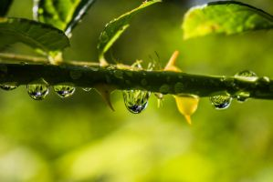Raindrops 2 by MegnRox15
