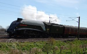 Union of South Africa 60009 1 of 2 by Moonstarphotos