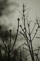 Gloomy Branches by Veavictis