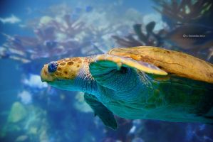 Green Sea Turtle by ashamandour
