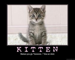 Kitten by lenden