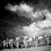 Clouds and trees infrared... by MichiLauke