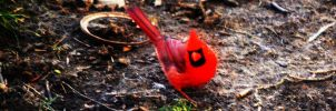 Cardinal III by tastybedsore