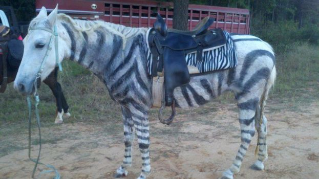 The Zebra stripes are beginning to sweat off... by LindiMaze