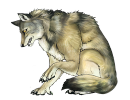 Ambrose wolfform by arania