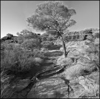 Kings Canyon Tree by partoftime