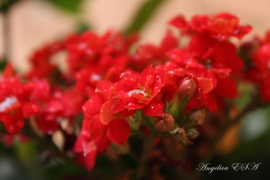 Red Flowers by RuskaAdagio