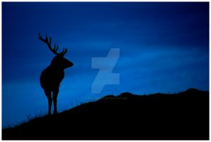 Stag Silhouette by DreamCreate