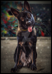 Brinks the Sable GSD + Speed Painting..! by Angiegsnz