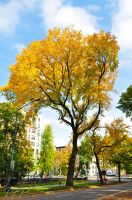 Central Park Fall Tree by FeldmanPhotography
