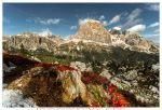 Autumn flowers and Tofana di Rozes by JamesRushforth