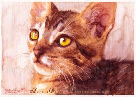 Tom the cat by AuroraWienhold