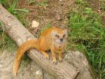 mongoose by Chanywho