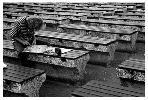 Benches by Kingfishers