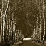 take leave from autumn by augenweide