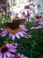 Butterfly and a Pink Flower by leighbennett
