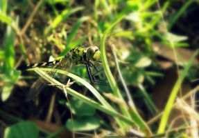 Dragonfly- Green III by BloodyMinded6
