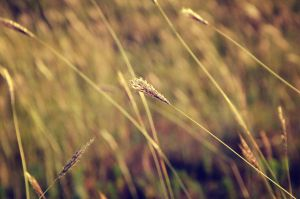 grass... by rayxearl