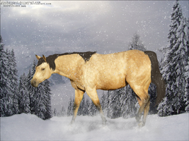 Mustang in Snow by Soppinaro