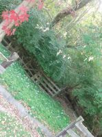 A Sense Of Autumn In The Backyard by XxXNikkiColaXxX