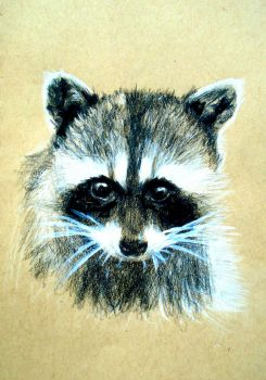 Raccoon2 by lucifer-in-the-flesh