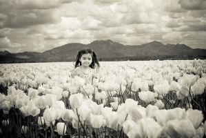 field of white tulips by toribio