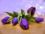 Purple Tulips by WhiteBook