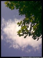 Sky and tree by brittanyandalvin
