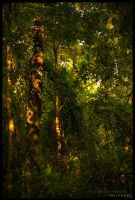 The Jungle by FasterThanChris