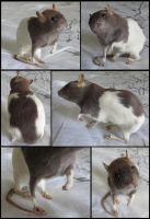 Hooded Rat Mount - SOLD by xDoglate