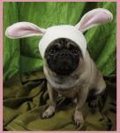 Easter Bunny Dog Hat 2 by ImogenSmid