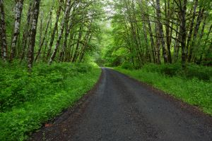Oregon Forest Road Stock 1 by leeorr-stock