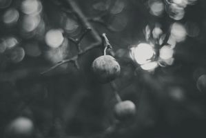 Black Bokeh by BlueColoursOfNature
