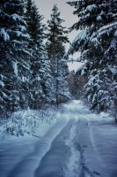 Winter road 2 by minko2312