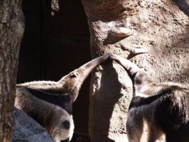 Tongue-tied Anteaters by Gizmoguy7