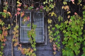 ivy window by marlene-stock