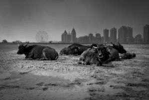 Urban Grazing by lwc71