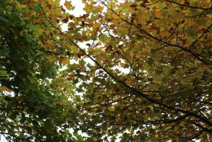Under the leafs by lifeforceinsoul