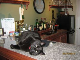 Guinness the Pub Cat by ChapterAquila92