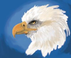 Eagle by arvalis