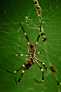 In the Spiders Web IV. by katt-25