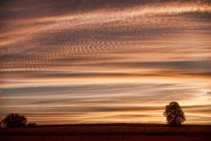 Lines of fire by Anupthra